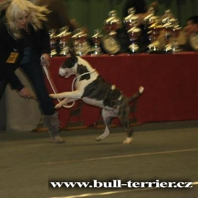 Ronja Lily Plzeňský Bull